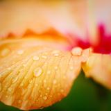 Orange Drops Photographic Print by andre bernardo