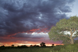 The Sunset over the Kalahari Photographic Print by Heinrich van den Berg