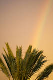 Rainbow and Palm Tree Photographic Print by Brian Stablyk