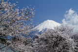 Mount Fuji and Cherry Blossoms Photographic Print by Photo by Henporai