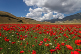 Poppies Photographic Print by Manuelo Bececco global nature photographer