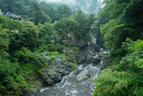 Lush River Gorge in the Mist, Japan Photographic Print by Ippei Naoi