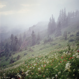 Foggy Forest and Hillside of Wildflowers Photographic Print by Danielle D. Hughson