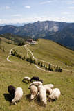 Germany, Bavaria, Sheeps Grazing on Meadow, Rotwandhaus in Background Photographic Print by  Westend61
