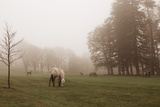 Dartmoor Ponies in Mist Photographic Print by Nichola Sarah