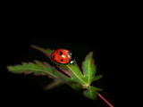 Ladybug Photographic Print by Jim McKinley
