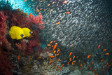 Coral Reef Scenery Reprodukcja zdjęcia autor Georgette Douwma