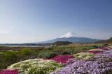 Mt. Fuji Photographic Print by  takuya.skd