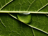 Water Drop on Leaf Photographic Print by Mark Mawson