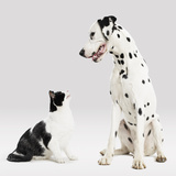 Portrait of Cat and Dog Photographic Print by Paul Bradbury
