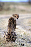 Cheetah, Kenya, Africa Photographic Print by James Gritz