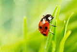 Ladybird Photographic Print by Copyright OneliaPG Photography