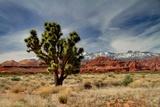 Joshua Tree in Utah High Desert Photographic Print by Jan Zwilling