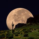 Coyote Moon Southwestern Cactus Mountain Fotografisk trykk av Dusty Pixel photography