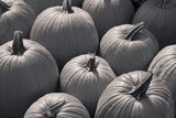 Pumpkins Photographic Print by Brian Yarvin