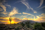 Saguaro Sol Photographic Print by Jason Corneveaux