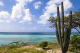 Scenic with Cactus by Coast, Mangel Halto Beach, Aruba, Lesser Antilles, Caribbean Photographic Print by Alberto Biscaro