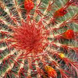 Cactus en Primer Plano Photographic Print by Almudena Marcos