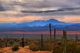 Lawrence Goldman Photography - Sonoran Desert Floor - Fotografik Baskı