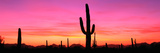 Usa, Arizona, Organ Pipe National Monument, Sunset Photographic Print by Robert Glusic