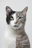 Composite Portrait of Two Different Cats Photographic Print by John Lund