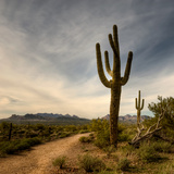 Saguaro Photographic Print by Merilee Phillips