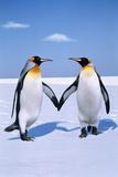 King Penguins (Aptenodytes Patagonicus) (Digital Composite) Fotografisk tryk af Johnny Johnson
