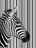 Zebra with Barcode Background Photographic Print by Brad Wilson