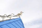 Seagulls on Roof of Kiosk Photographic Print by Axel Schmies