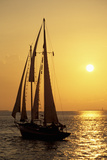 Sailboat Sailing in Golden Sunset Light, Miami, FL Photographic Print by Hisham Ibrahim