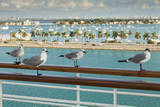 Sea Gulls on Railing of Cruise Ship Photographic Print by Juan Silva