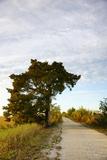 Cypress Tree along Path through the Marsh Photographic Print by Joseph Shields