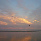 Seagull in Flight at Sunset Photographic Print by Joseph Shields