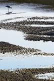 Grey Heron Fishing Fotografisk tryk af Richard Packwood