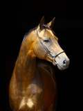 Golden Horse Photographic Print by Photographs by Maria itina