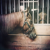 Horses Photographic Print by Jaclyn Sollars