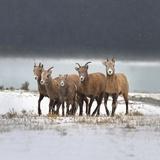 Nordegg, Alberta, Canada Photographic Print by Design Pics / Richard Wear