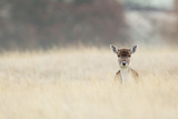 Hello! Photographic Print by  MarkBridger