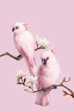 Cockatoos and Magnolia Photographic Print by BJI/Blue Jean Images