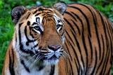 The Tiger in a Royal Mood Photographic Print by Photo by Debapriyo Majumdar