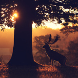 Rimlight Photographic Print by  MarkBridger