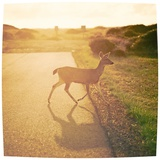 Deer at Sunset Photographic Print by Matt Carey