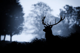 Blue Stag Photographic Print by  MarkBridger