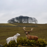 Toy Tiger and Stag /Deer on an outside Wall Reprodukcja zdjęcia autor Fiona Crawford Watson