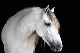 Horse's Face Photographic Print by Monica Rodriguez