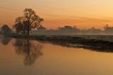Sheep Sunrise Photographic Print by  paulscreen