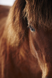 Close-Up of Horse Eye Photographic Print by Johner Images