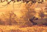 Breath Photographic Print by  MarkBridger