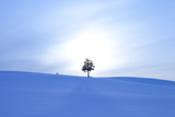A Fox and a Tree in Snow Field Photographic Print by  ICHIRO