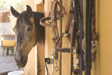 Horse Peeking Head out of Barn Photographic Print by Cultura Travel/UBACH/DE LA RIVA